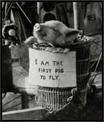 first pig to fly